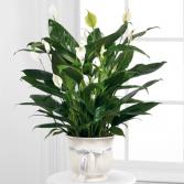 Comfort Planter green plant