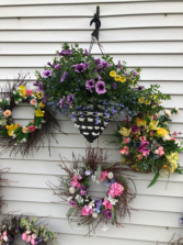 Cone combinations Blooms Hanging Baskets From Roma Florist