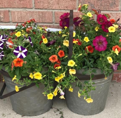 Containers of Blooms Annual Flower Baskets