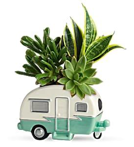 Cool Camper Succulent - 115 Arrangement