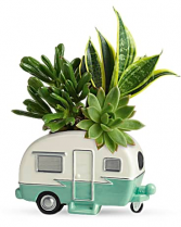 Cool Camper Succulent For Him or Her