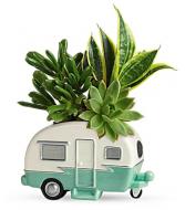 Cool Camper Succulent Garden