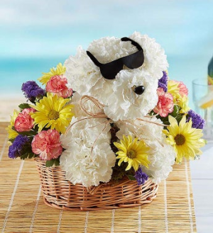 Cool PUP   in Sunrise, FL | FLORIST24HRS.COM