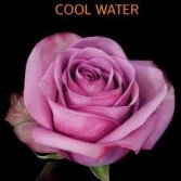Cool Water Rose