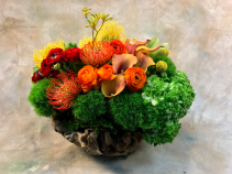 Coraly Reefy Art arrangement