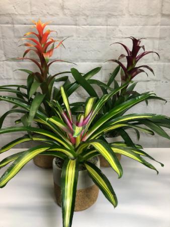 Bromeliad Plant  in Grey & Cork Ceramic Pot
