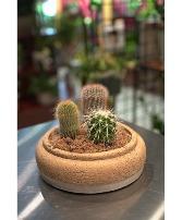 Corky Cactus Garden   Easy-Care Indoor Plant