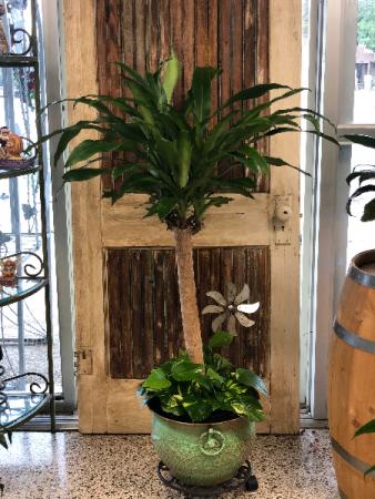 Corn Plant with Pathos Ivy