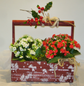 COUNTRY CHRISTMAS PLANTER BOX Indoor Blooming Plant