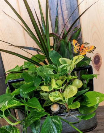 Country Greenery Dish Garden