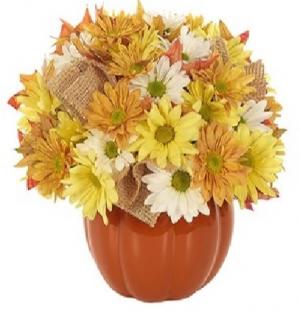 Country Pumpkin Daisy Delight BF427-11KMP in Arlington, TX   Erinn's Creations Florist