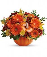 Country Pumpkin   T175-1C