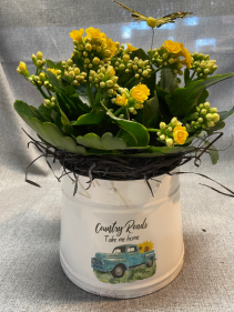 Country Roads Kalanchoe