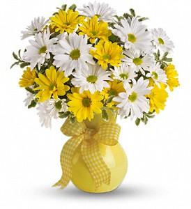 Crazy Daisies yellow or purple vase