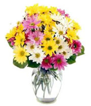 Crazy Daisy Vase Arrangement in Lebanon, NH | LEBANON GARDEN OF EDEN FLORAL SHOP