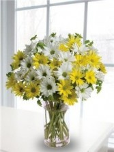 Crazy For Daisies Fresh Arrangement