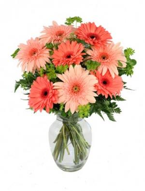 Crazy in Love Daisies Arrangement in Burlington, NJ | Tollivers Florist