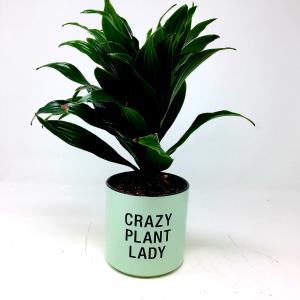 Crazy Plant Lady  in Clearwater, FL | FLOWERAMA
