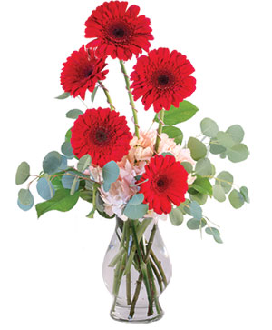 Crimson Gerberas Floral Design in Granville, NY | The Florist at Mandy's Spring