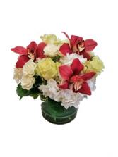 Cymbidium Rubies on Snow  Cut Flowers
