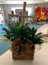 Cross Planter Plant