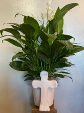 Cross Planter with Green Plant