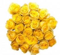Cubana  Roses