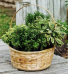 Culinary Lover Herb plants with Crushed Olive Oil and Vinegar