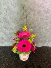Tiny cup of gerberas Pavee Arrangement