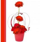 Cupids Arrow Romantic Floral Design
