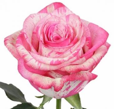 """Cupids Kiss"" Rose Arranged Vase Dozen"
