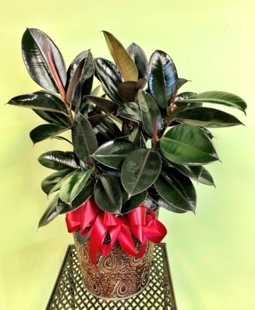 Custom 51 Plant Arrangement