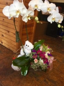 custom combo orchids /flowers /stuffed animal
