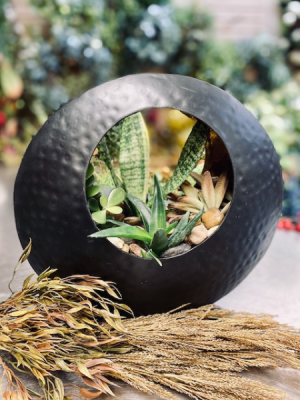 Custom Design Succulent Planter  in Shoreview, MN | HUMMINGBIRD FLORAL