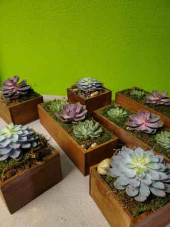 Custom designed succulent gardens Plant
