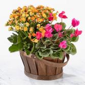 Custom spring plant duo