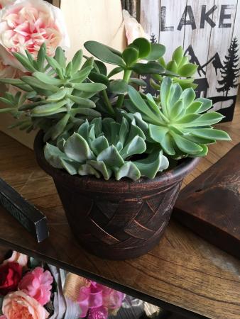Custom Succulent Garden