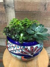 Custom Succulent Garden Talavera Plant