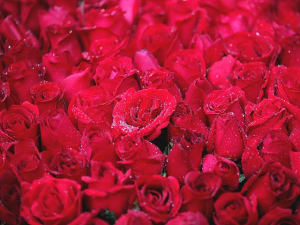 Trust us  in Windsor, ON | K. MICHAEL'S FLOWERS & GIFTS