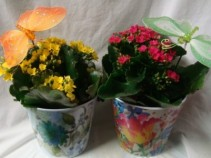 "CUTE 4"" POTS IN CONTAINERS WITH A BUTTERFLY!"