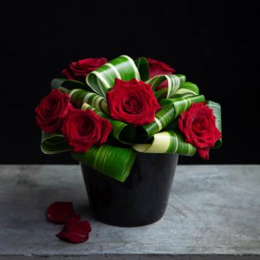 Cute as a button Roses
