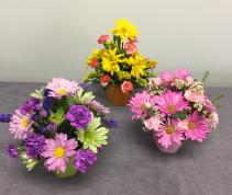 Cute Cup of Flowers Fresh Arrangement