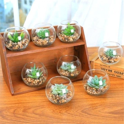 Cute single succulent  Garden Arrangement