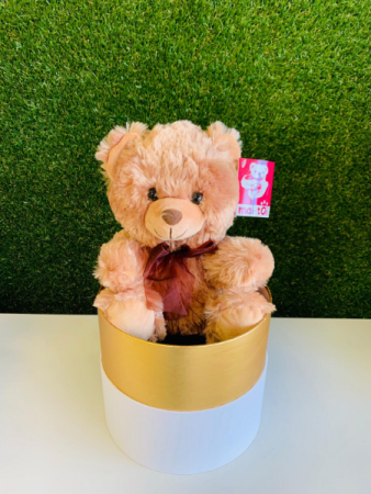 Cute Teddy Bear in a nice Box