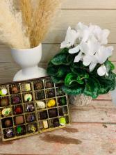 Cyclaman and Sweetopia Chocolates