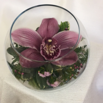 Cym Orchid Easter Specials