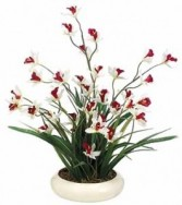 Cymbidium & Grass-SILK BOTANICAL