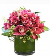 Cymbidium Orchid Arrangement - color may vary **LIMITED TIME OFFER**