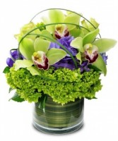 Cymbidium Orchid with Hydrangea - color may vary **LIMITED TIME OFFER**