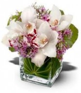 JB 2-Cymbidium orchids in a compact arrangements (Also available in other colors)